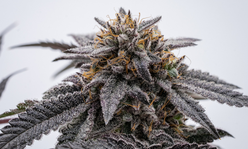 Read more about the article Which Is Best For My Needs: Edibles, Flowers, or Concentrates?